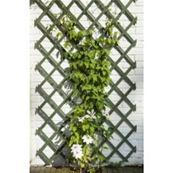 Mreža drevená zelená / 6041702