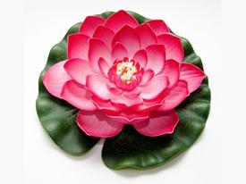 Lotus Foam Fuchsia 20 cm / 123668