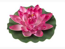 Lotus Foam Fuchsia 28 cm / 123592