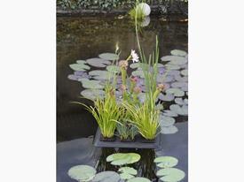 Set - Stojan pre plávajúce ostrovy na vodné rastliny na 6 košíkov